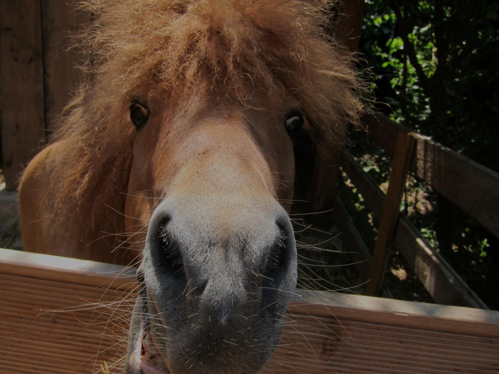 Süße Ponys – Einstellbetrieb